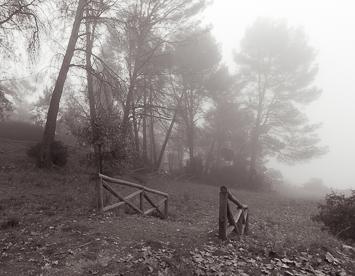 Niebla22
