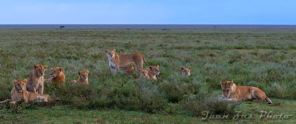 Mes de los leones