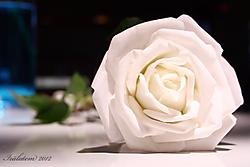 una_rosa_es_una_rosa.JPG