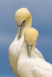483-Birds-20140815121233.jpg