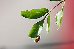 Escarabajo15.jpg