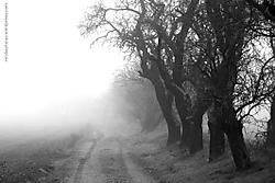 Niebla15.JPG