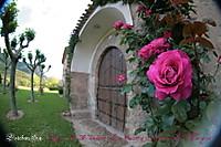 Rosas4_resize.jpg