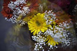 flores60.jpg
