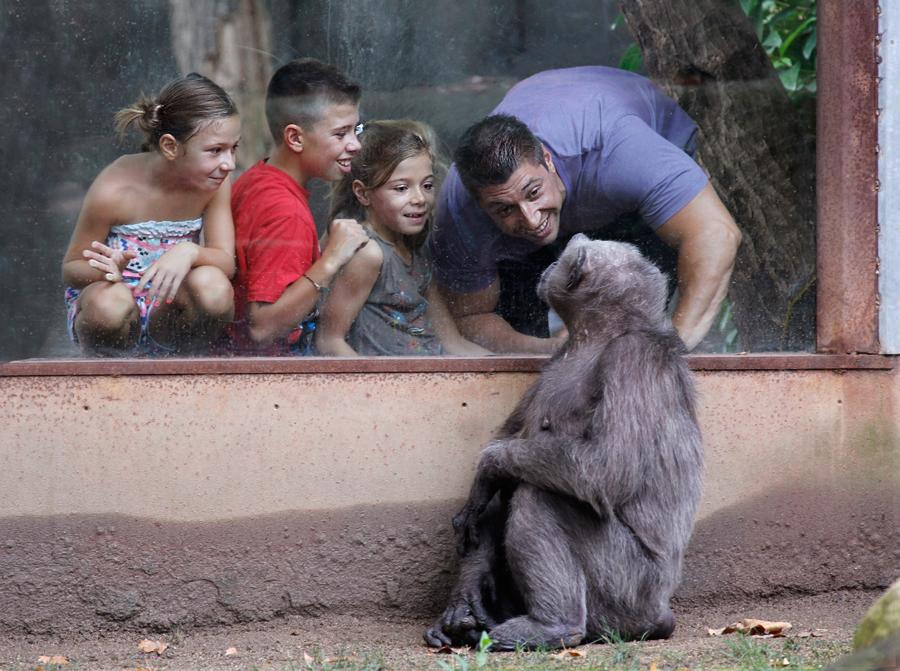 Que-monos_