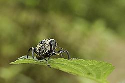 Escarabajo41.jpg