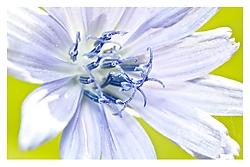 Florecilla9.jpg
