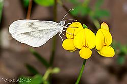 Mariposa-3b.jpg