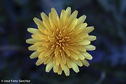 Miniatura_Flores_002.jpg