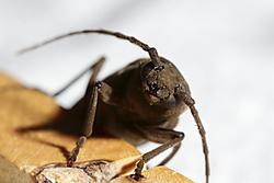 escarabajo14.JPG