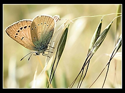 mariposa-y-espiga.jpg