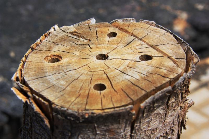 Termitas comen madera de cedro